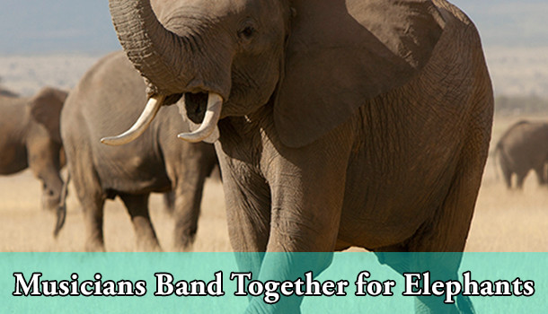 matt sorum open letter against ivory trade