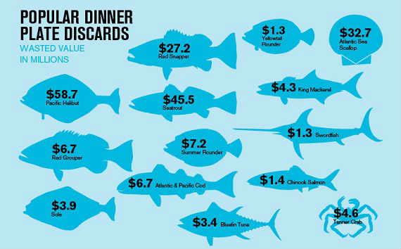What Does Bycatch Really Cost Our Fishermen… and Our Fisheries?