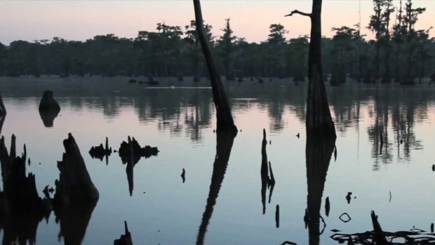 Environmental Economics Come to Louisiana's Atchafalaya Basin