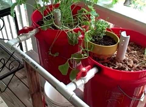 The DIY Aquaponics System: 6 Plans for Bringing Fish and Plants Together to Grow Food