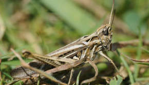 eating crickets is good for you and the planet