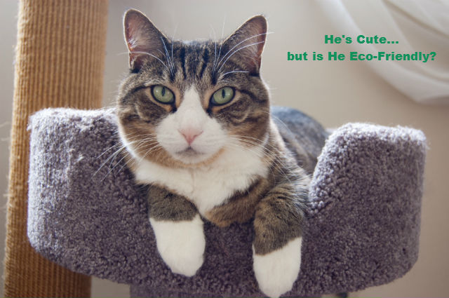 eco-friendly indoor cat