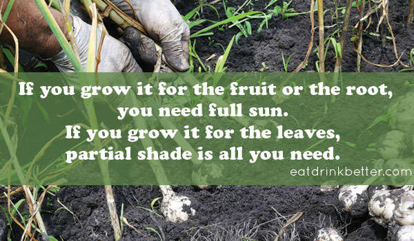 fall vegetable garden sunlight guide