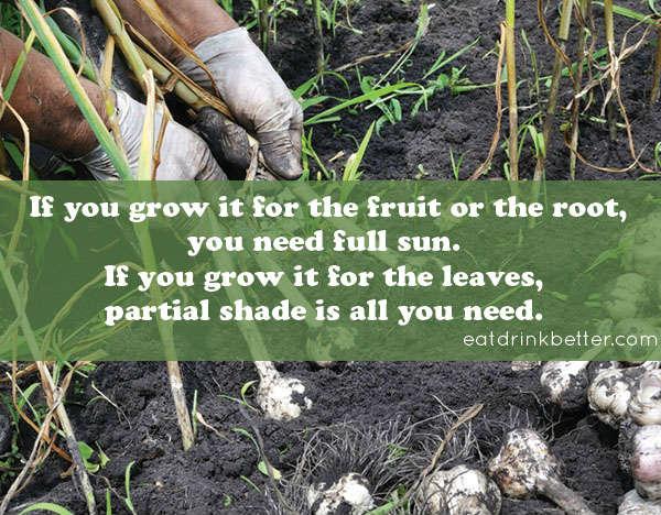 fall vegetable garden sunlight guide