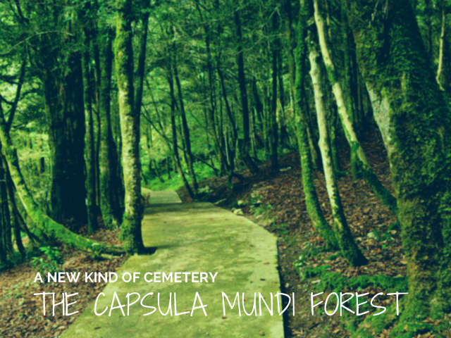 capsula mundi turns a cemetery into a forest
