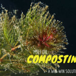 invasive plant species milfoil