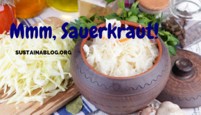 sauerkraut is a product of fermentation