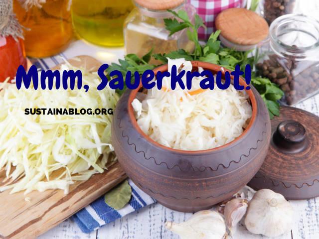 sauerkraut is a product of fermentation