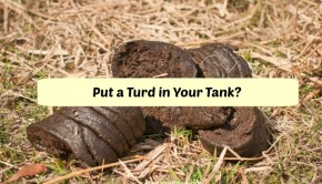 poop power - ethanol from cow manure