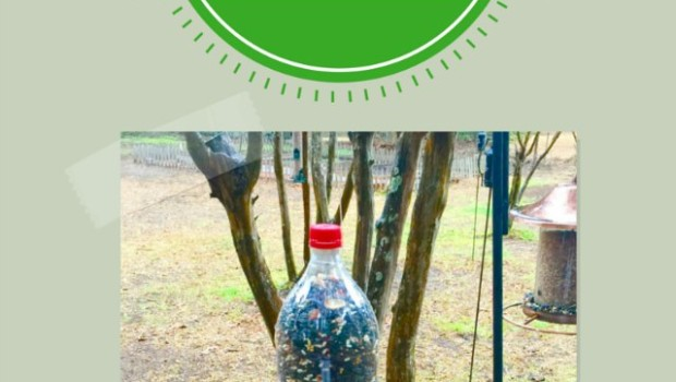 soda bottle bird feeder project