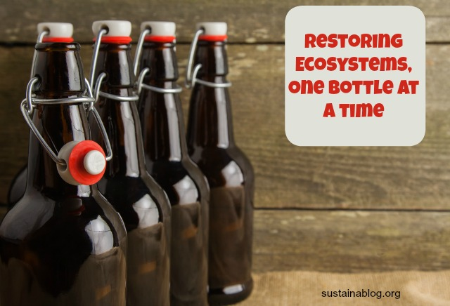 old tree brewer is working to restore ecosystems through sale of its fermented and soft drinks