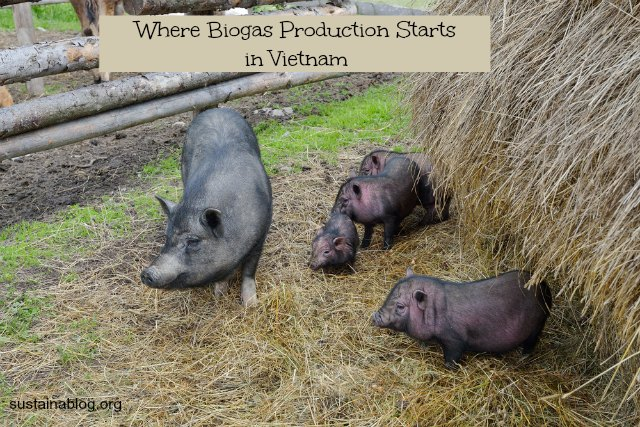 where biogas production starts in vietnam