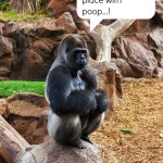 gorilla thinking about animal poop as a power source