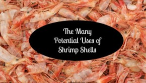 shrimp shells