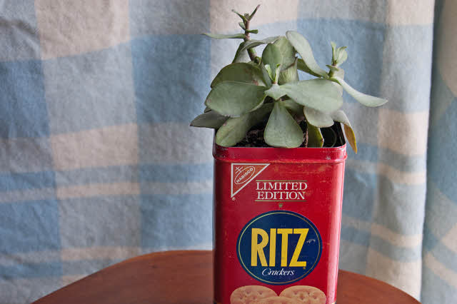 planter made from a cracker box