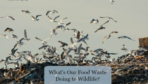 what's our food waste doing to wildlife