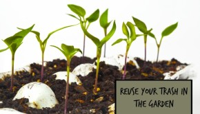 garden recycling your trash